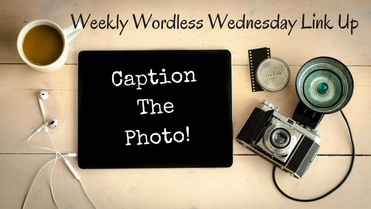 Play Caption This – Wordless Wednesday Link Up #31